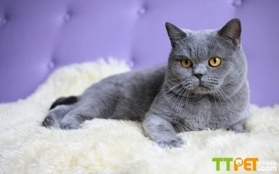 其实猫咪也有很多种类,每一品种也有每一个品种的可爱之处.